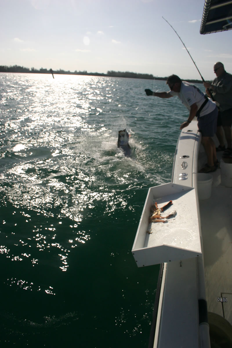 Fish key west florida as seen on espn key west tarpon for Fish in key west